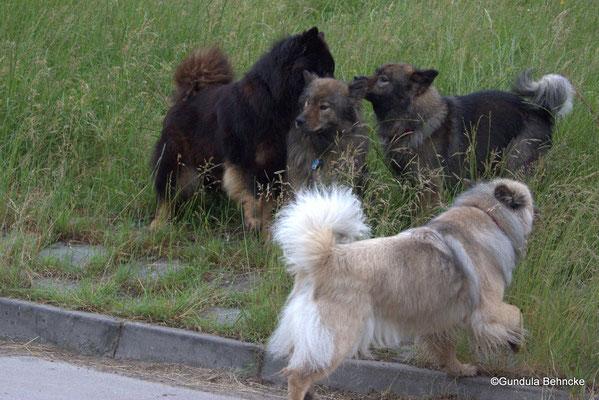 Hinten: Birka vom Brenztal(li.), Sanny(Mitte) und Tochter Bonny(re.), Vorne: Aylana