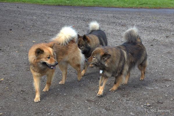 Billie-Bijou(li.), Bonny(dahinter) und Mama Sanny(re.)