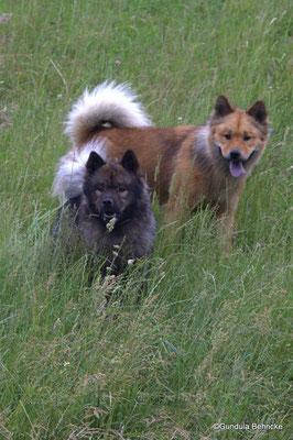 Bonny(vorne) und Schwester Billie