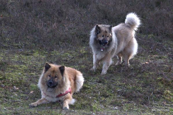 Luna(vorne) und Mama Aylana vom Kranichblick(hinten)
