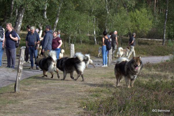 Rechts: Kaitow vom Braulshof