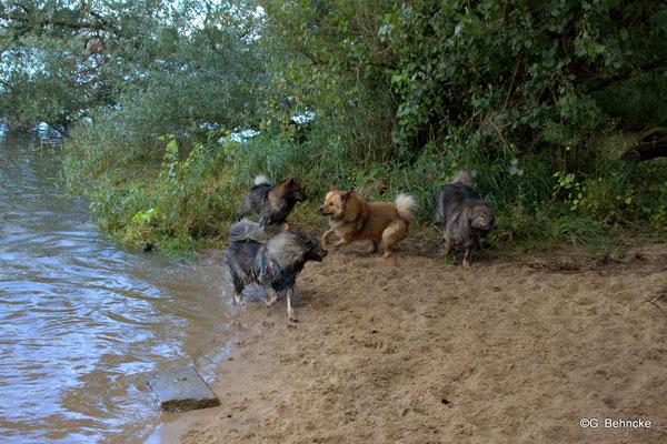 Sanny(re.) mit Blikki, Billie und Bonny