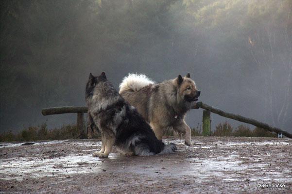 Aika von der Wettloopsheide(vorne) und Da Qela´ BoBo(hinten)