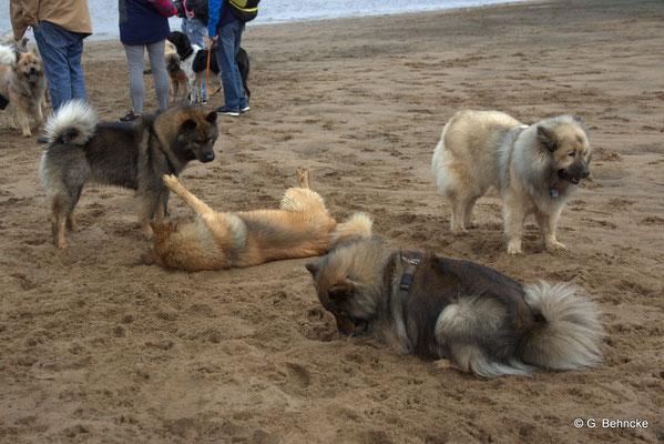 Bonny(hinten li.), Billie(davor), Mama Sanny(vorne) und Aylana vom Kranichblick(hinten re.)