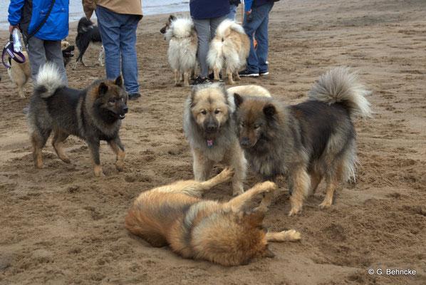 Billie lässt Bonny, Aylana und Sanny nicht schlecht staunen.