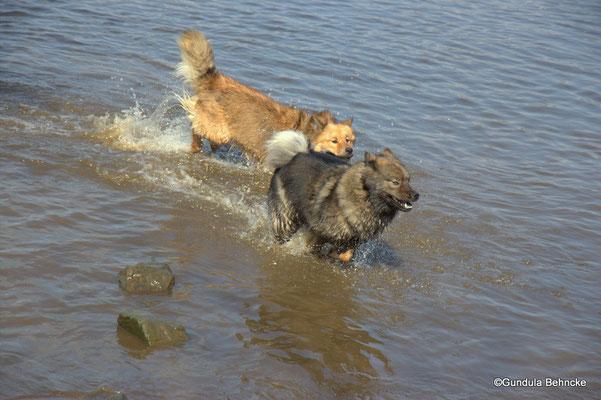 Billie-Bijou(hinten) und Bonny(vorne)