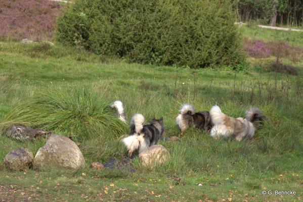Gemeinschaftliches Wassertreten im Büsenbach