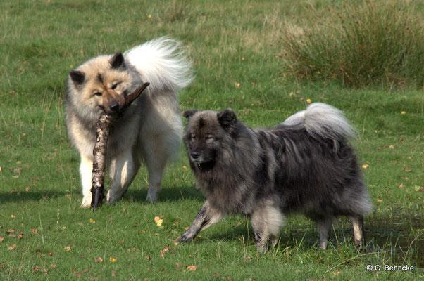 Aiko(vorne) und BoBo