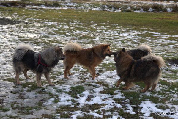 Von li. hinten: Eskia, Billie-Bijou, Bonny, vorne: Sanny