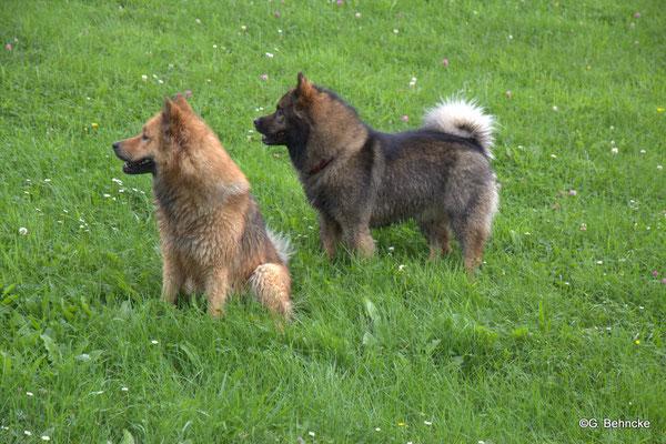Billie(li.) und Bonny(re.)