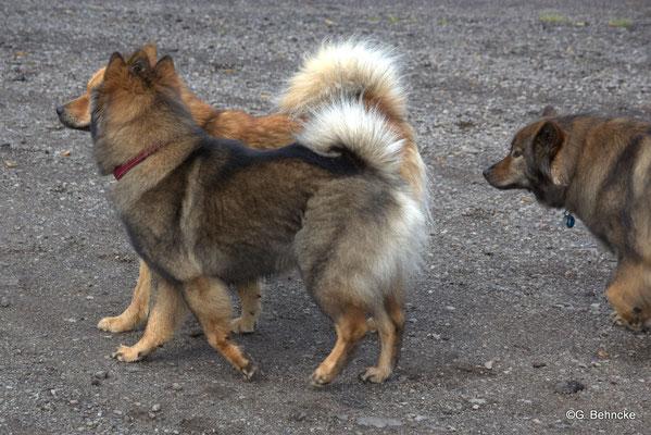 Bonny(vorne) und Billie-Bijou(hinten) und Sanny(re.)