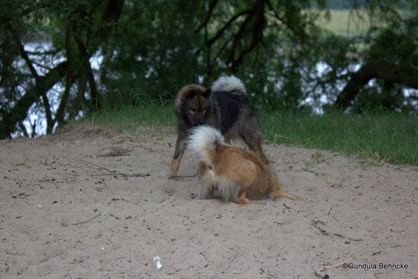 Billie(vorne) und Bonny: eine spezielle Geschwisterliebe