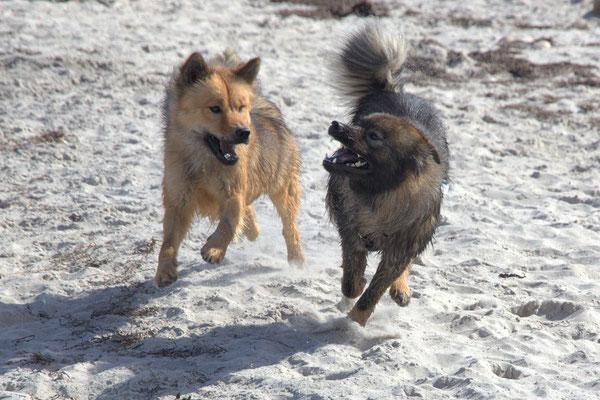 Billie-Bijou(li.) und Bonny(re.) vom Bossardpfad