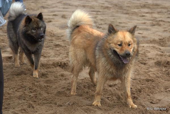 Bonny(hinten) und Billie