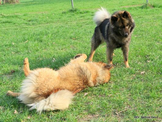 Billie-Bijou und Bonny