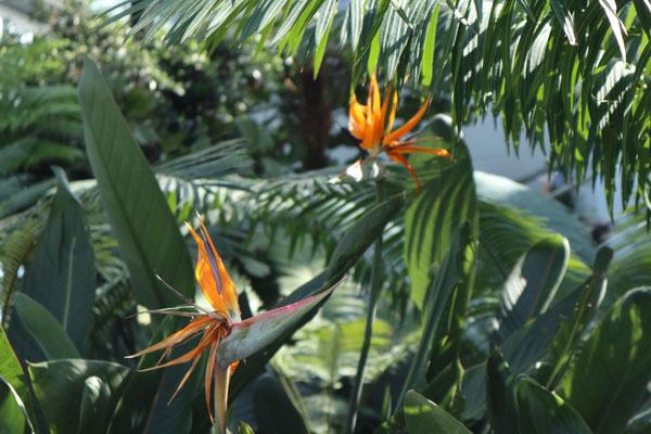 Zugegeben, der Gartenanteil ist nicht riesig, aber umso schöner :)