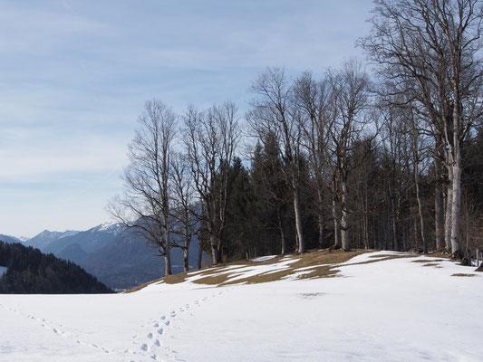 Wäldchen im Schnee