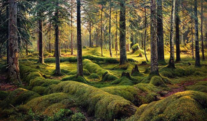 Waldfriedhof (Totholz) - Iwan Iwanowitsch Schischkin (Foto: CC0) - Praxis für Psychotherapie, Barbara Schlemmer, Dipl. Psychologin