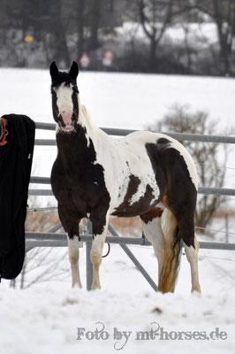 Ich liebe dieses Pferd!