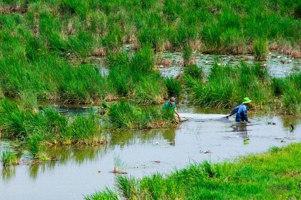Reisfeld in Vietnam