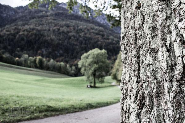 Baumrinde und Feld