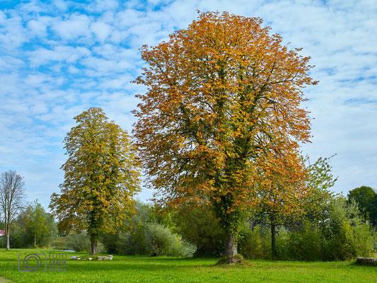 Laufen Herbst