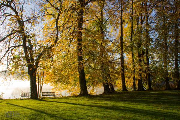 Bäume am Kloster Seeon