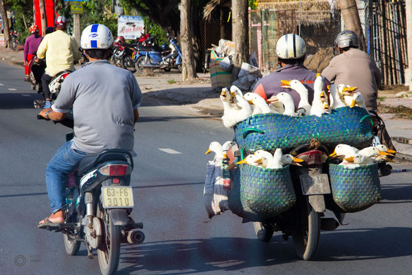Gänsetransport in Vietnam