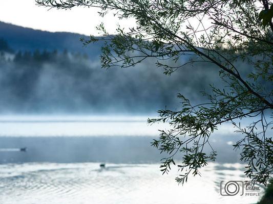 Hintersee - Nebel