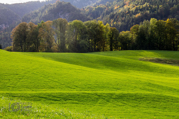 Grüne Felder