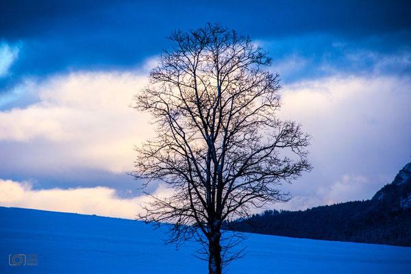 Inzell - Baum