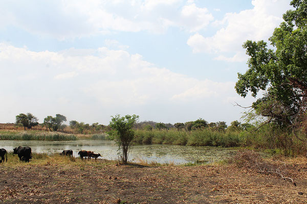 Landschaft Simbabwe © Shona Art Skulpturen - NEUERRAUM