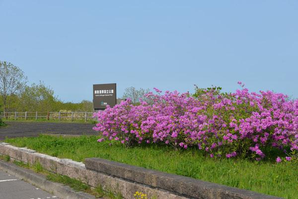 釧路湿原(北斗側)