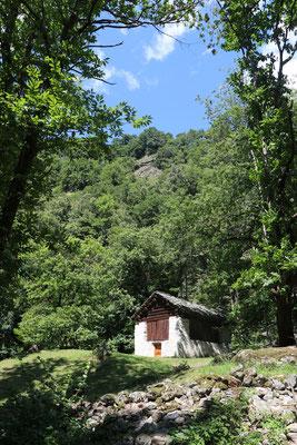 Im Kastanienwald unterhalb von Soglio.