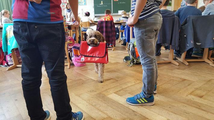 Die Schulhunde Carlos und Gambo - Domschule Bamberg