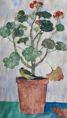Geranie mit Grünfink, Otto Eberhardt, 1948, Aquarell, Papier, 20x35cm, ID1798