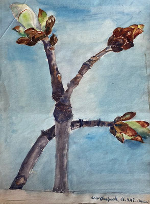 Zweig, Otto Eberhardt, 1947, Aquarell, Papier, 20x25cm, ID1795