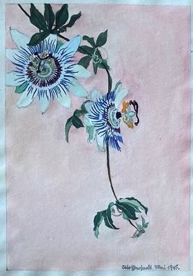 Passiflora, Otto Eberhardt, 1945, Aquarell, Papier, 21x29cm, ID1835