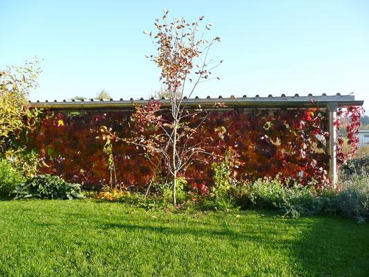 Eine wahre Farbenpracht im Herbst.