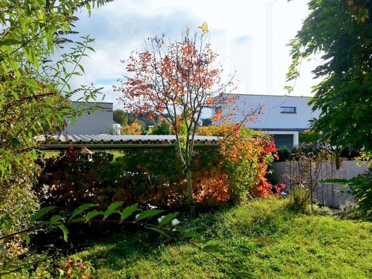 Der auf der Rückseite des Carports nach oben rankende wilde Wein schützt Garten und Terrasse vom Frühjahr bis in den November hinein dicht und bunt vor neugierigen Blicken.