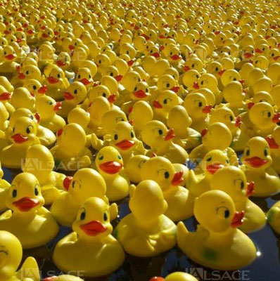 Participation de Géoénergies & Aquae Vision  à la Duck Race le 27 mai 2017 Strasbourg