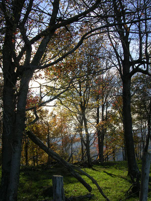 The forest on the mountaintop of our family's West Virginia farm where the hickory grew.