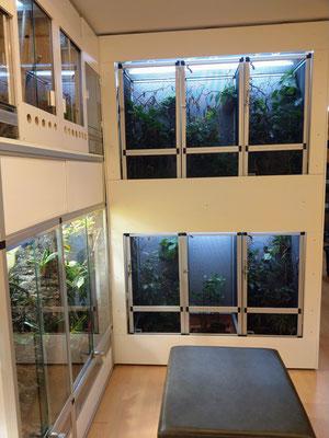 South africa indoor terrarium