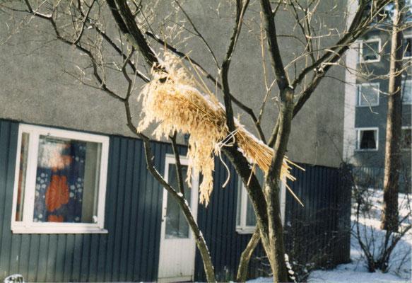 野鳥のためのライ麦の束:冷たい風が吹きだすと、人々はライ麦の束を庭木にかけたり、森の木々のくぼみにピーナツを置いたりする。酷寒の地に生きる人々は、同じ冬を過ごす生きものに深い連帯感を持つのであろう。  1988年10月  百瀬淳子氏撮影