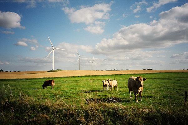 デンマークの田園風景と近代的風車       2004年6月 松村一氏撮影