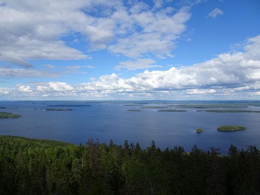 コリ国立公園   2019年8月 松村一氏撮影    フィンランド南部の最高峰ウッコ・コリからピネリエン湖を望む