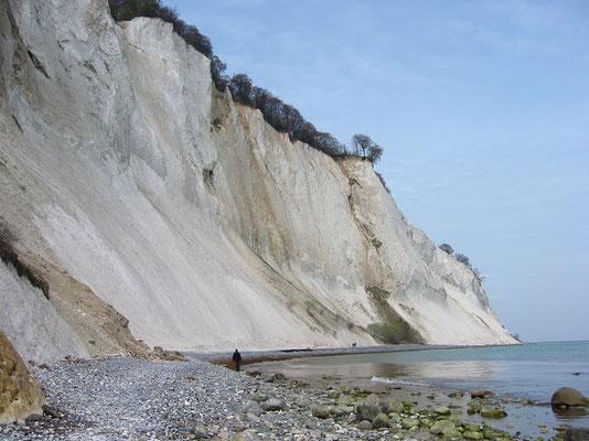 コペンハーゲン近郊のモン島で見られる白亜の断崖  2003年8月 松村一氏撮影