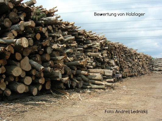 Biomasserecycling GmbH, Holzlager Foto: Andreij Lednizkij