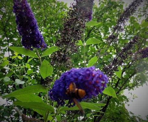 Vlinderstuik met mooi bewegend insect....