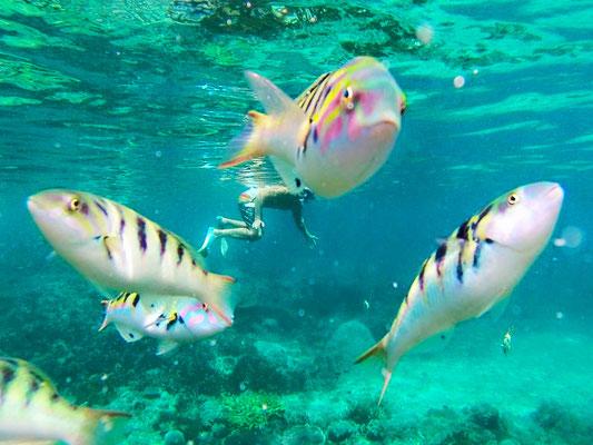 Lembongan - Snorkeling